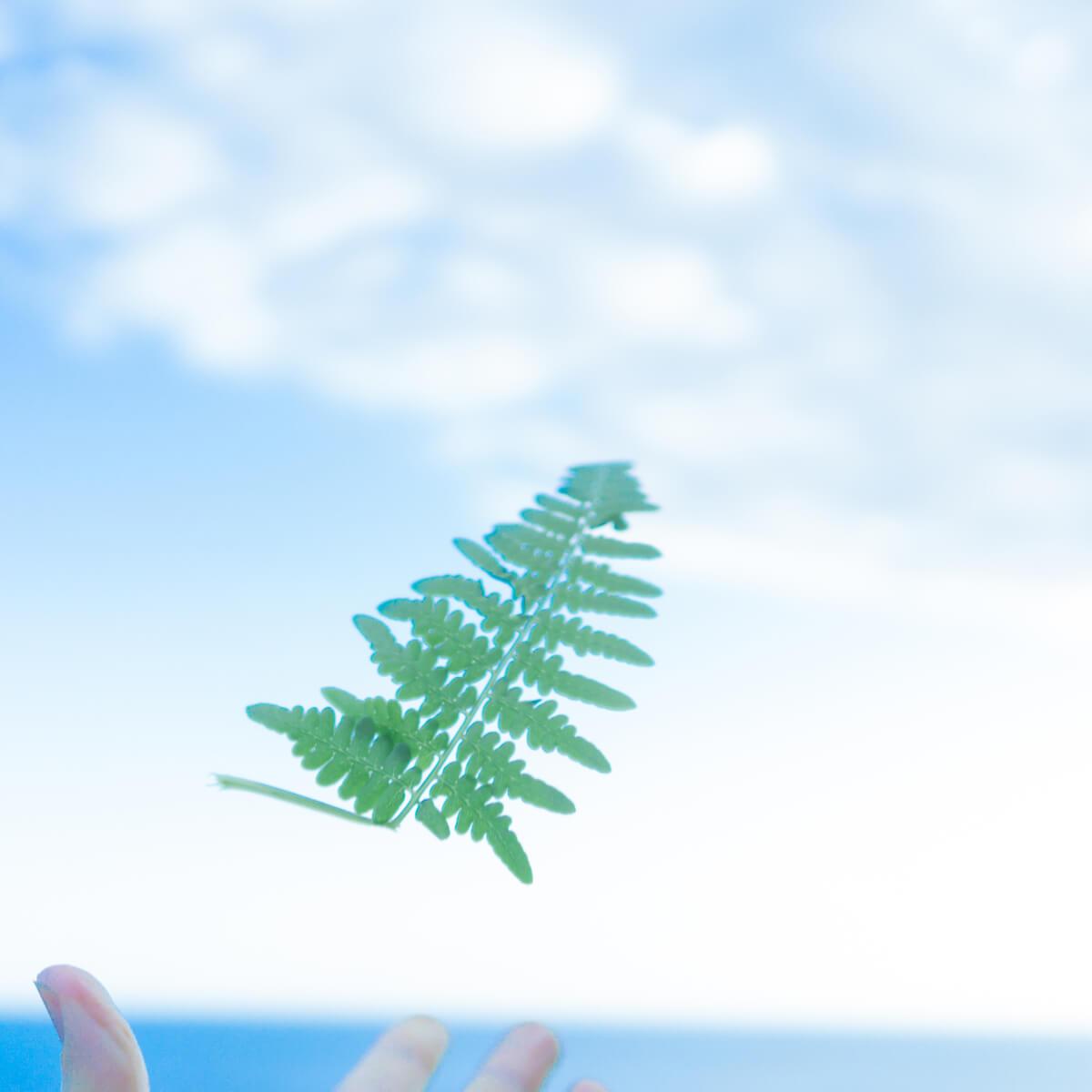 屋久島の海空 屋久島のシダの葉っぱ 屋久島日々の暮らしとジュエリー 屋久島でつくる結婚指輪