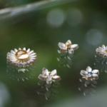 屋久島しずくギャラリーのディスプレイ プラチナ 屋久島の花モチーフ 屋久島でオーダーメイドジュエリー