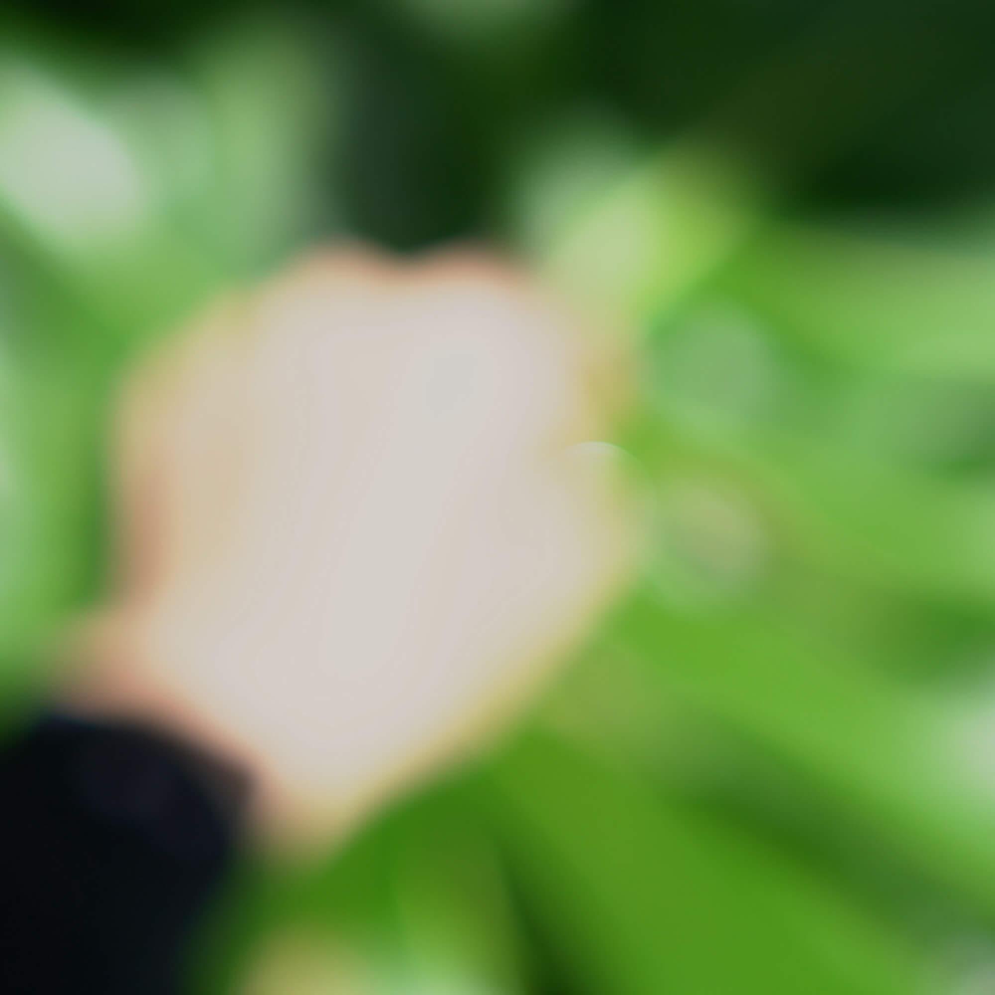 屋久島の緑の中 手の中に結婚指輪 屋久島森とジュエリー 屋久島でつくる結婚指輪
