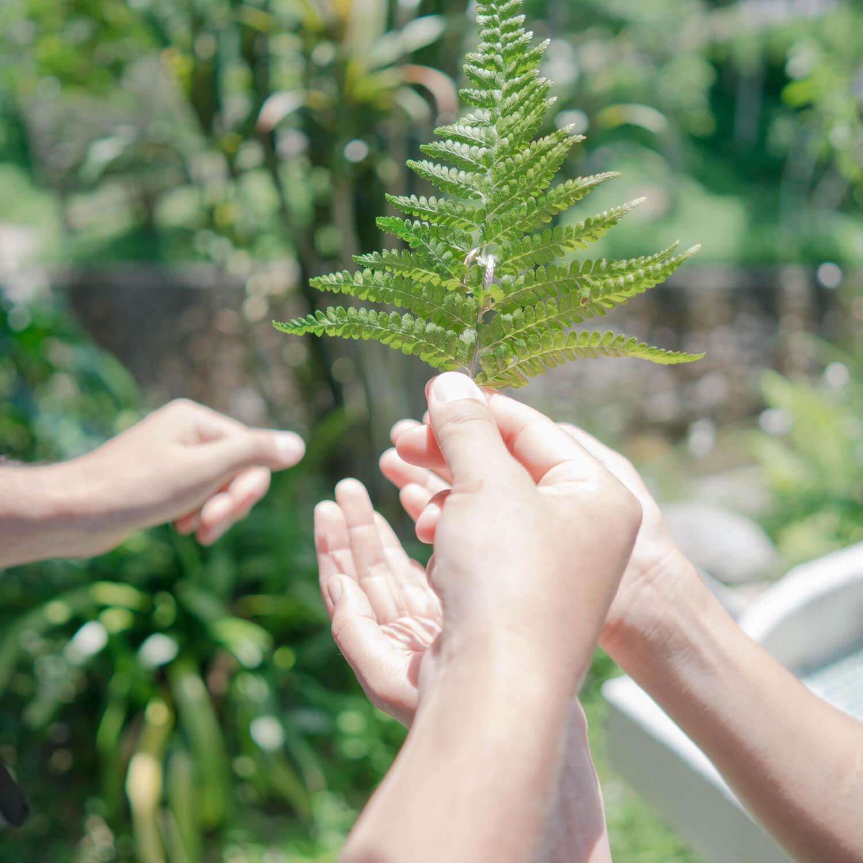 屋久島しずくギャラリー シダの葉っぱとオーダーメイドマリッジリング 屋久島でつくる結婚指輪