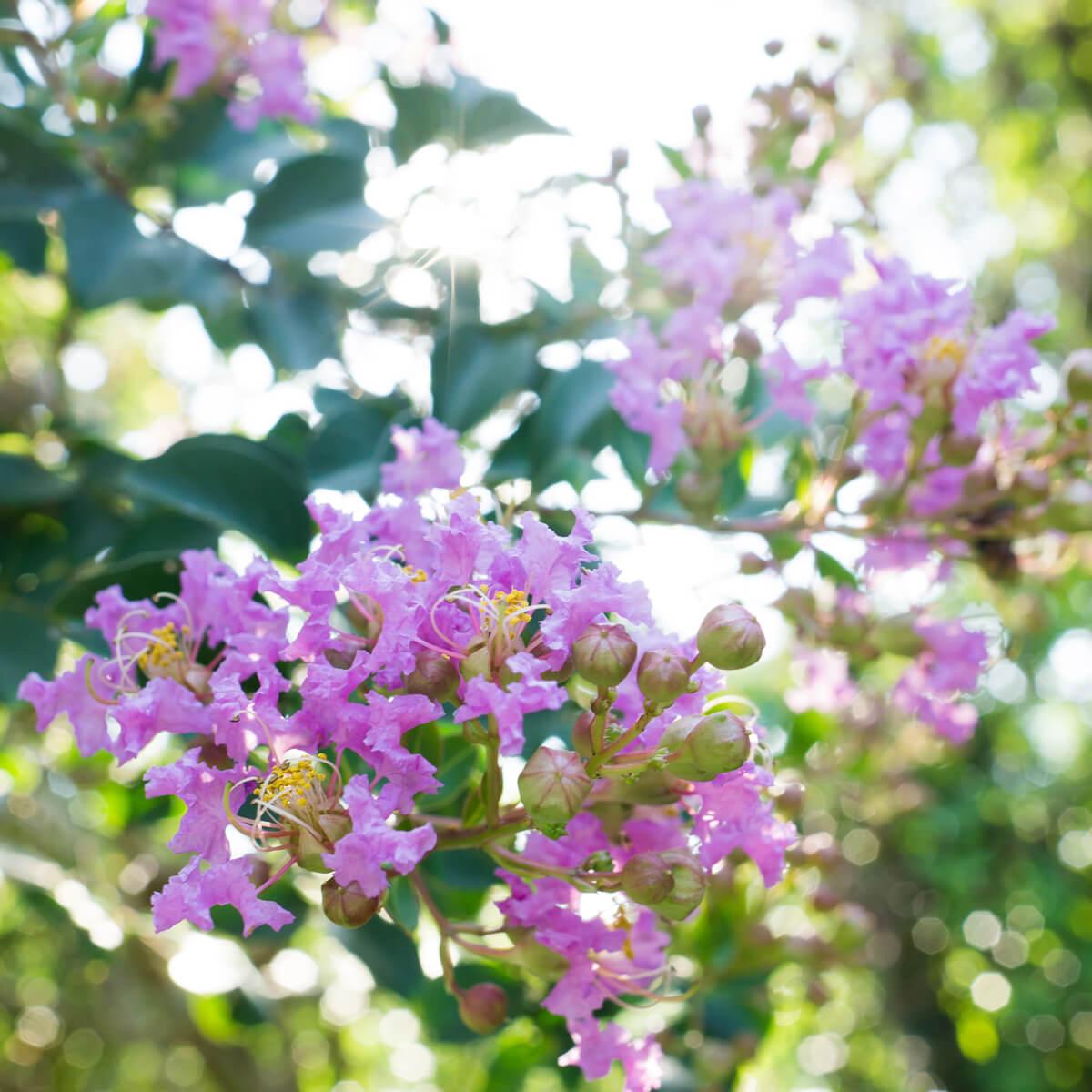 屋久島夏の花 木漏れ日 屋久島花とジュエリー オーダーメイドマリッジリングのインスピレーション