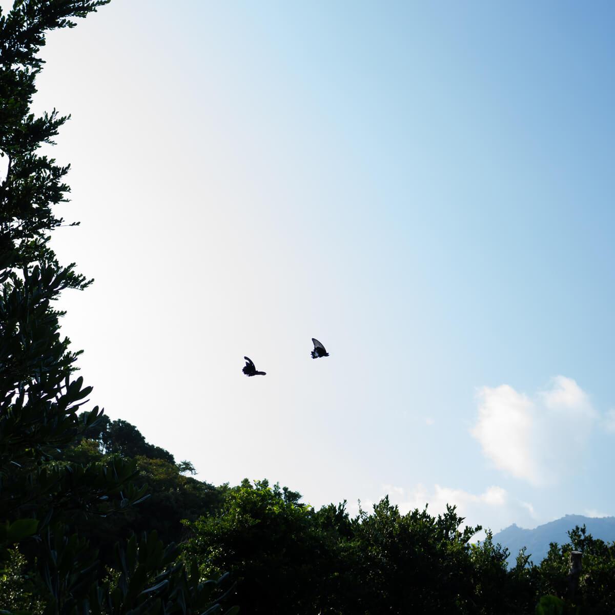 青空に蝶々 屋久島の山々 屋久島の木々 屋久島日々の暮らしとジュエリー 屋久島でオーダーメイド結婚指輪