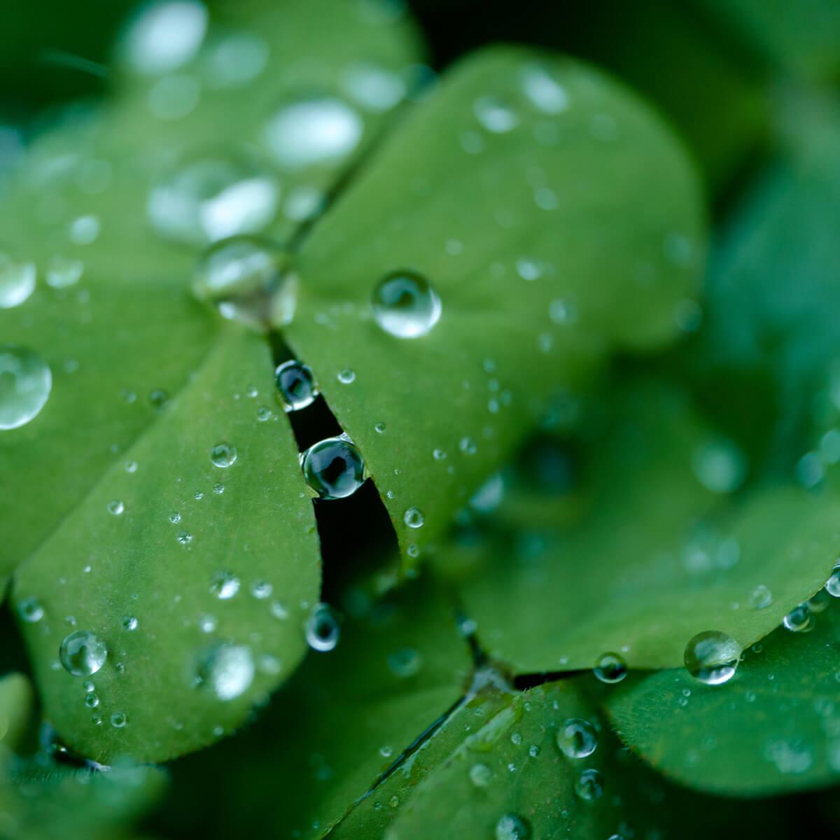 屋久島雨の雫 屋久島日々の暮らしとジュエリー オーダーメイドマリッジリングのモチーフ
