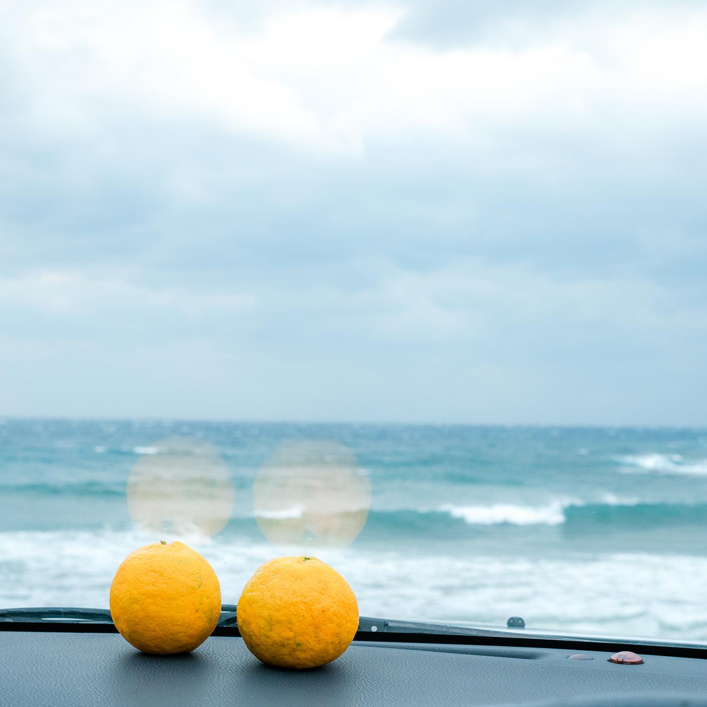 屋久島冬の色。海とジュエリーとミカン