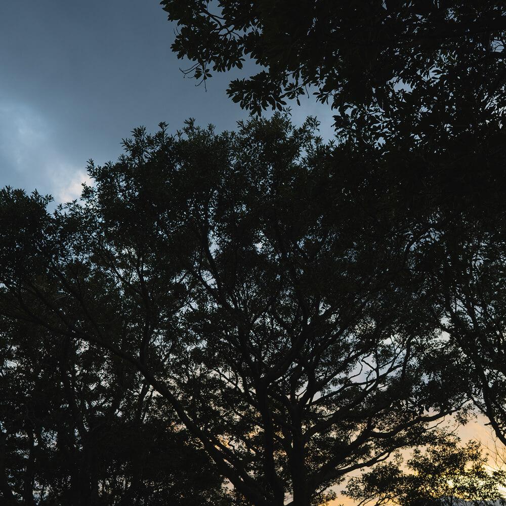 屋久島の夕暮れ 屋久島日々の暮らしとジュエリー オーダーメイドマリッジリングのインスピレーション