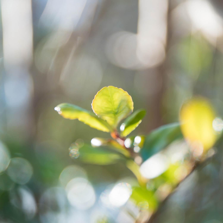 屋久島の葉っぱ 木漏れ日 屋久島花とジュエリー オーダーメイドマリッジリングのインスピレーション