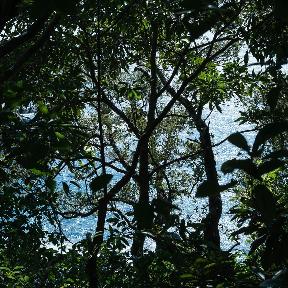 屋久島の森、海、キラキラ 屋久島日々の暮らしとジュエリー 屋久島でつくる結婚指輪