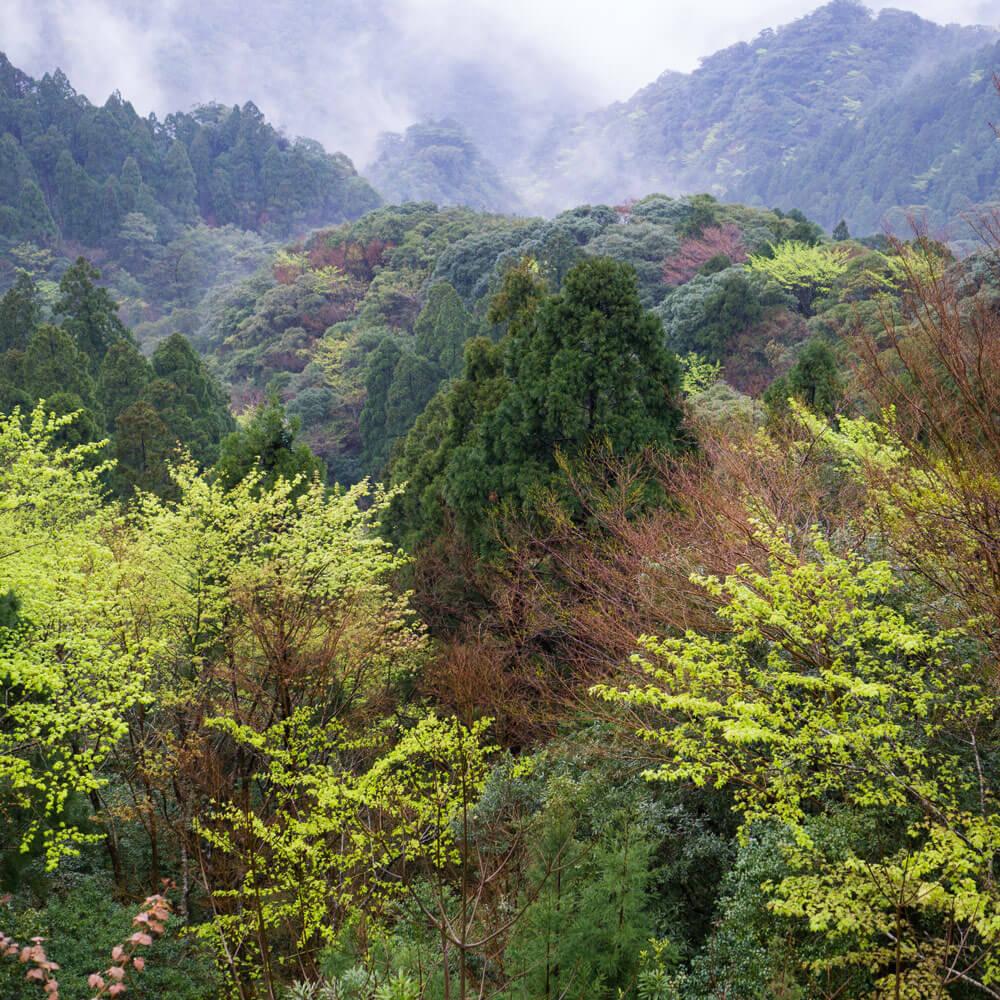屋久島の山々 新緑 霧 屋久島日々の暮らしとジュエリー