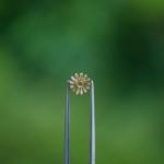 オーダーメイドリングの制作工程 屋久島の緑バック 屋久島のツワブキモチーフ ゴールド