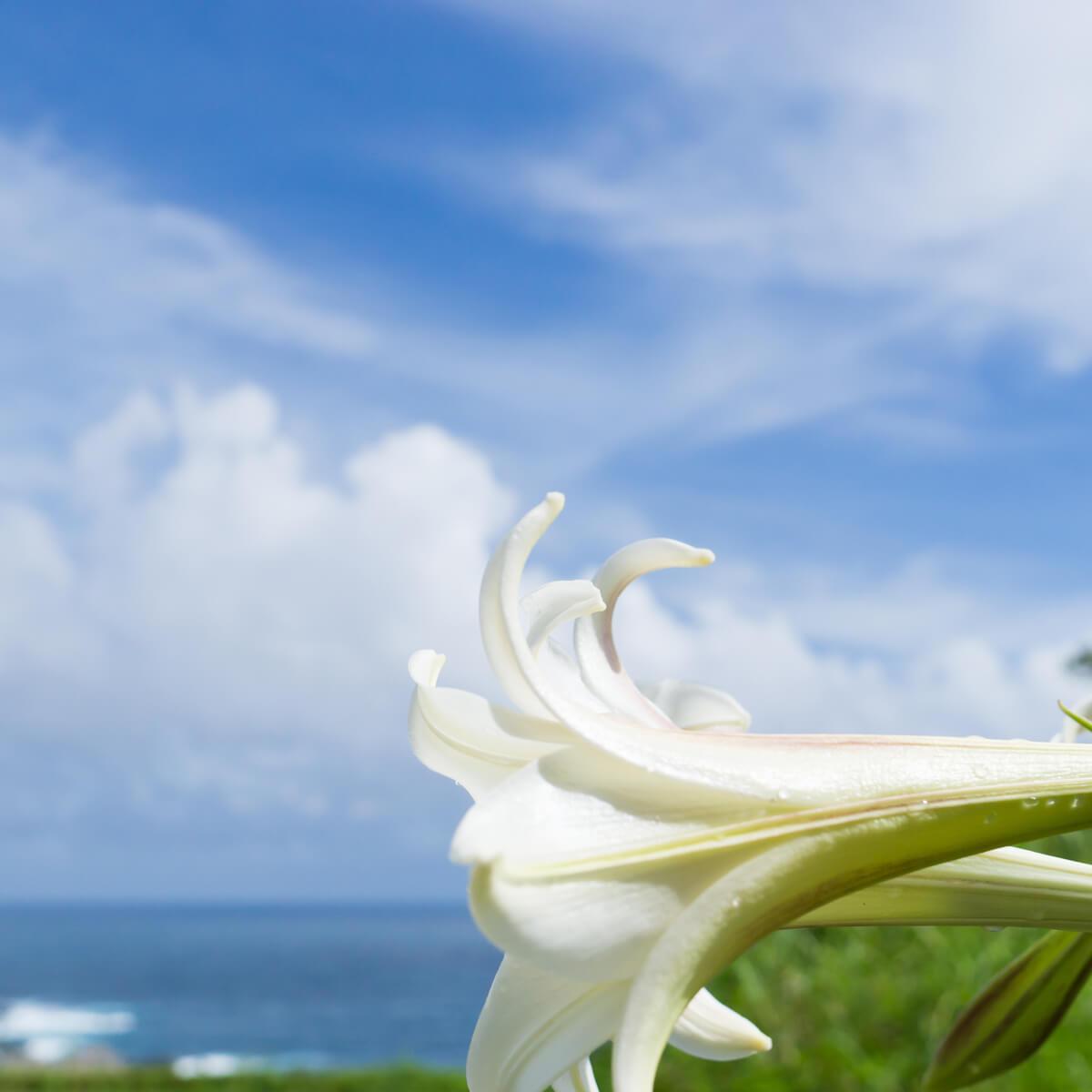 屋久島の海、空白百合 屋久島日々の暮らしとジュエリー 屋久島でつくる結婚指輪