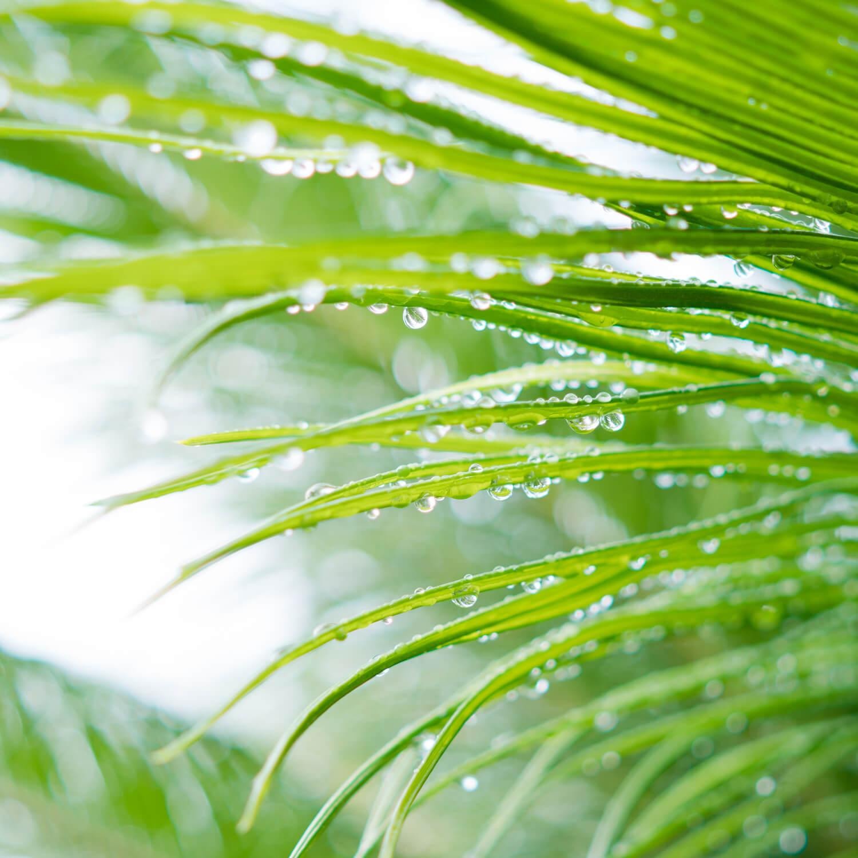 屋久島の雨上がり、雨のしずく 屋久島日々の暮らしとジュエリー 屋久島でオーダーメイドジュエリー
