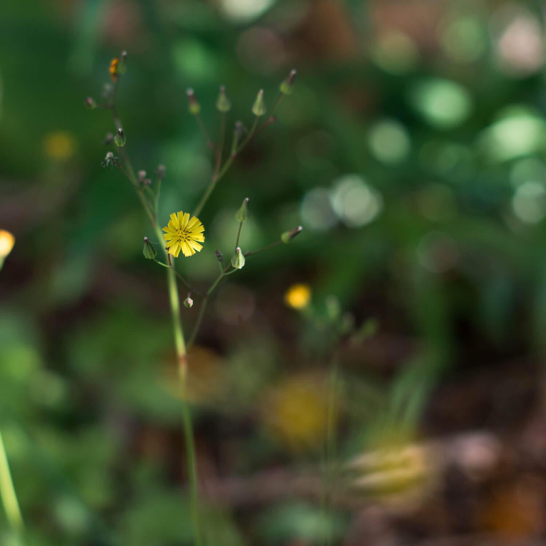 その3 屋久島の小花 屋久島花とジュエリー オーダーメイドマリッジリングのインスピレーション