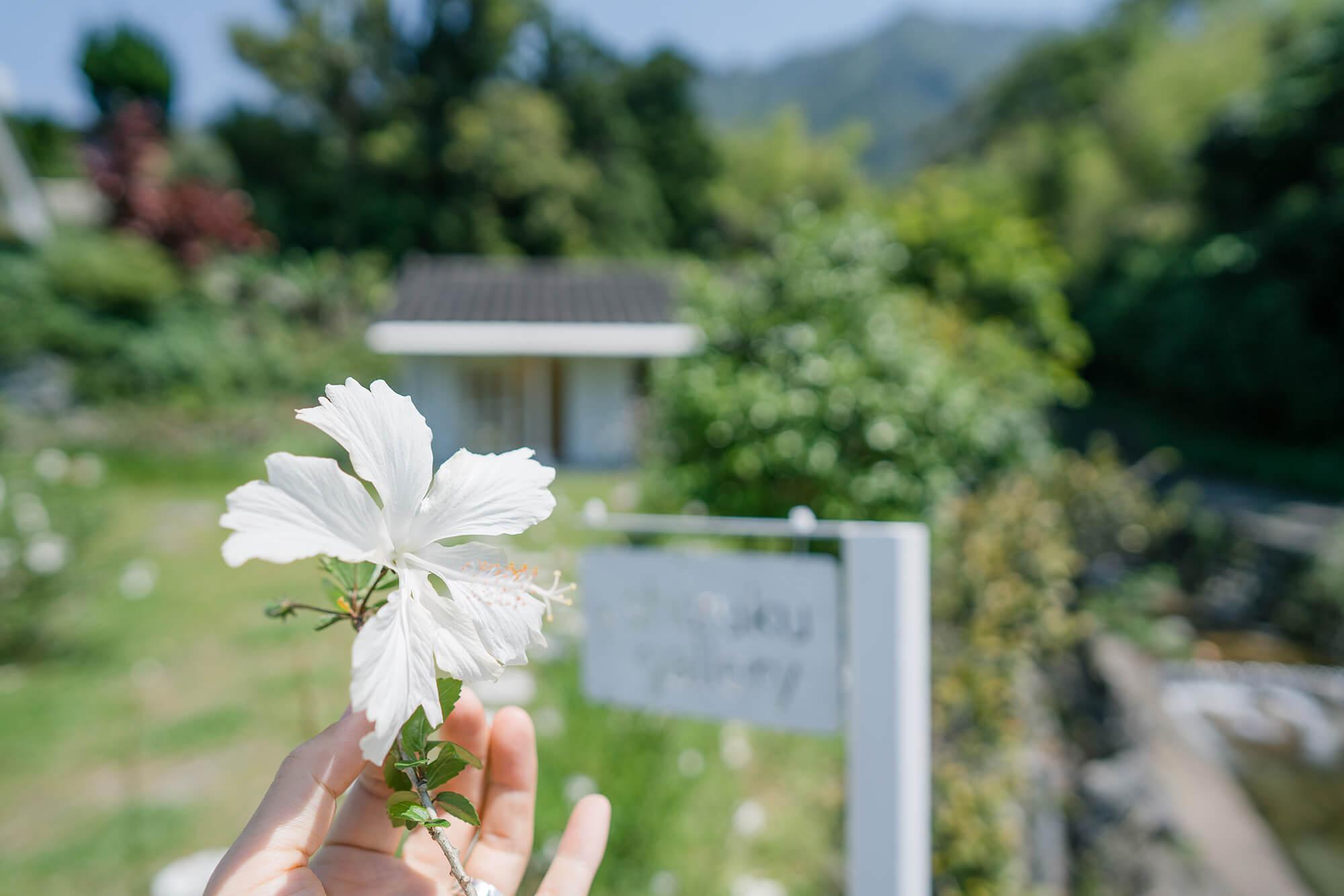 屋久島hしずくギャラリー外観 屋久島でオーダーメイドジュエリーの販売 屋久島でつくる結婚指輪