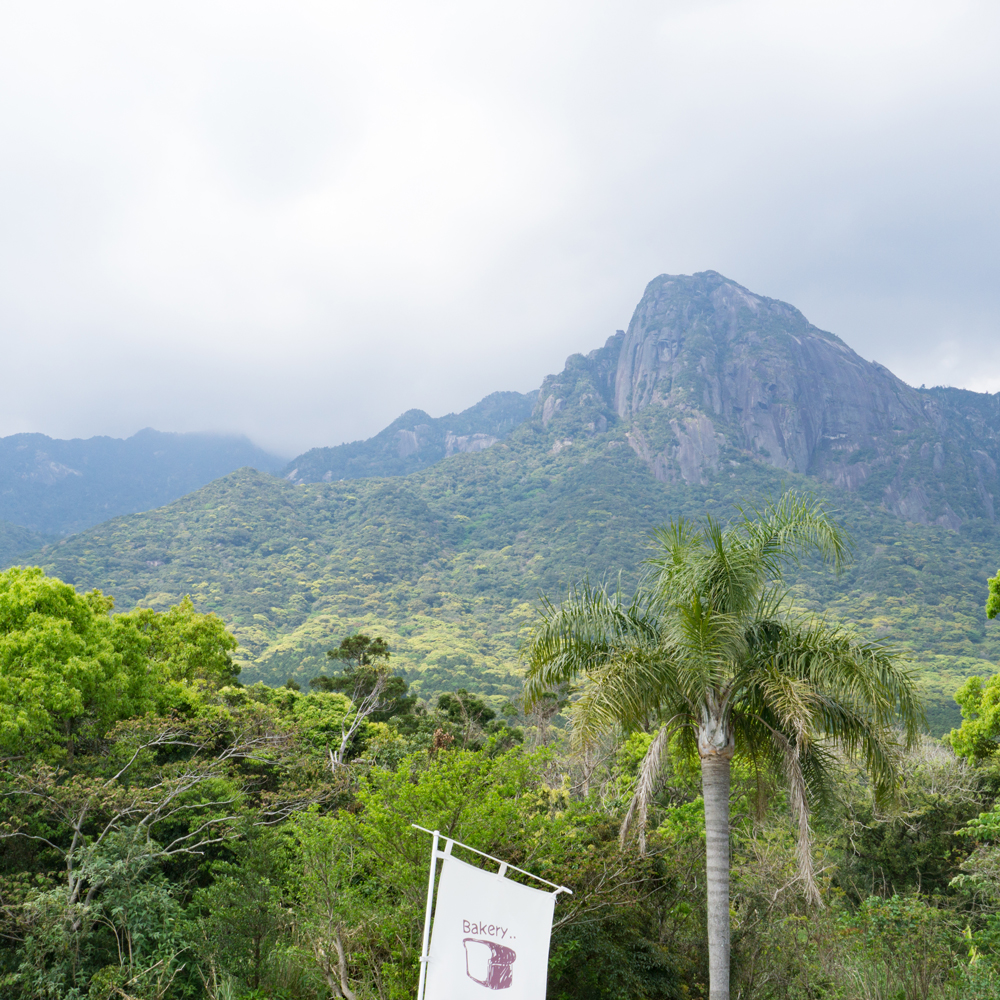 屋久島の山々 新緑 屋久島日々の暮らしとジュエリー