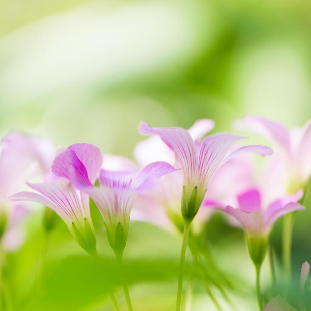 屋久島春の花 木漏れ日 オーダーメイドジュエリーのモチーフ