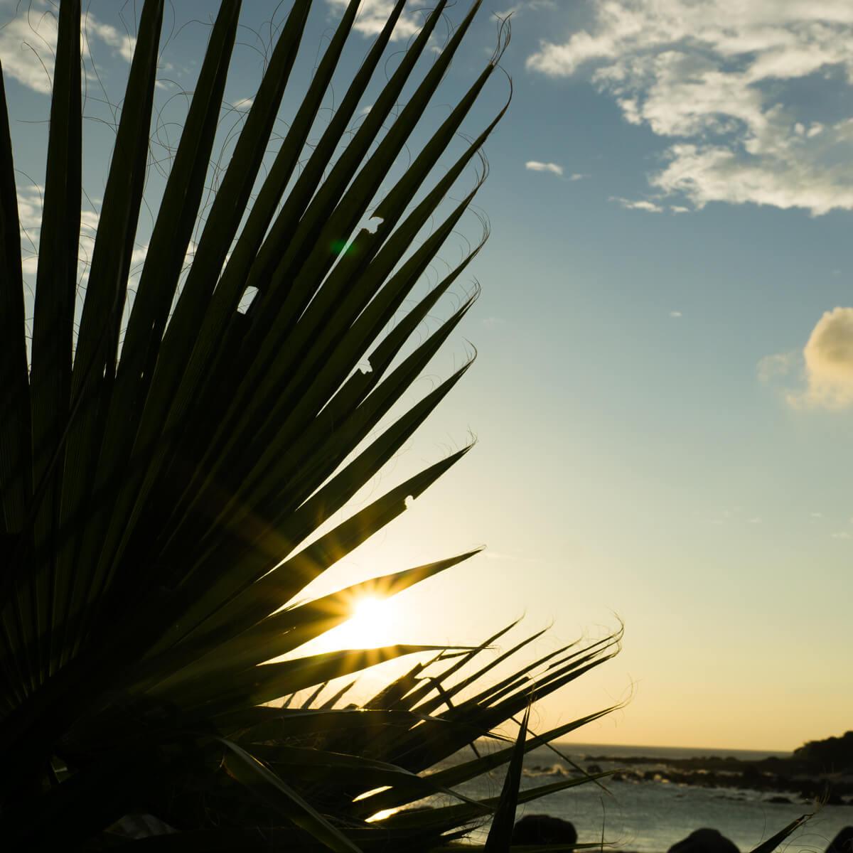 屋久島の海、空、ソテツの影 屋久島海とジュエリー 屋久島でつくる結婚指輪