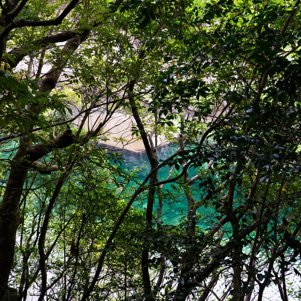 木々の向こうに見える屋久島の清流 屋久島日々の暮らしとジュエリー