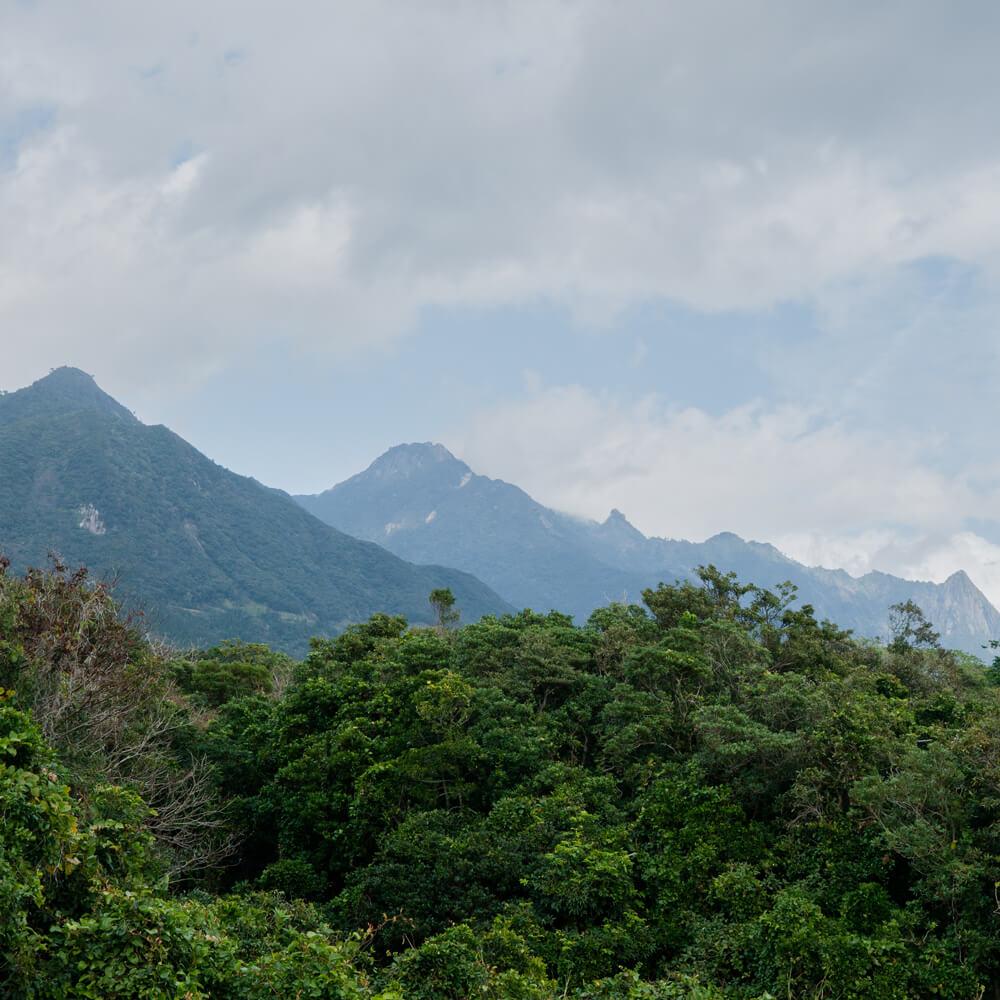 屋久島の山々 屋久島山とジュエリー オーダーメイドマリッジリングのインスピレーション