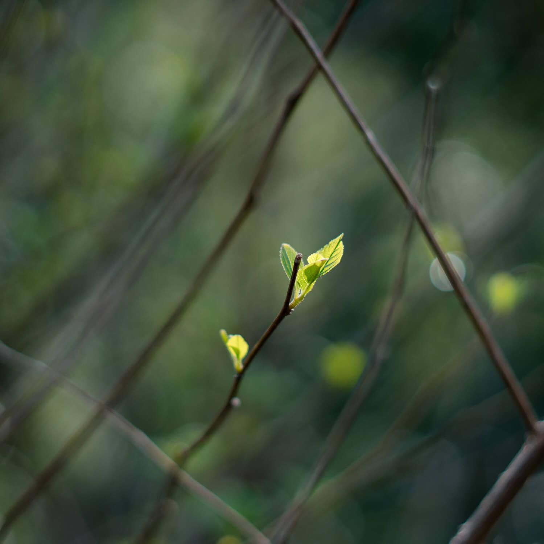 屋久島 木々の新緑 屋久島日々の暮らしとジュエリー