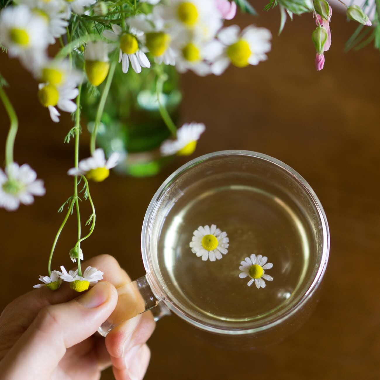 カモミールティー 屋久島春の花々越しに 屋久島花とジュエリーと