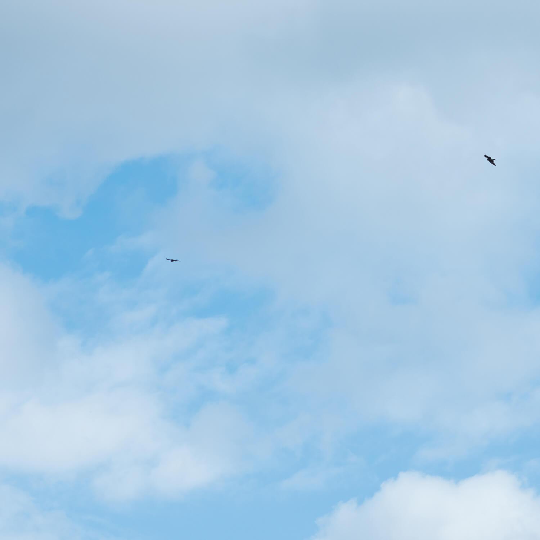 屋久島の空、鳥 屋久島日々の暮らしとジュエリー オーダーメイドマリッジリングのインスピレーション