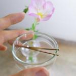 オーダーメイドマリッジリングの素材 シャーレの中手に持って 奥に屋久島の月見草 ゴールド 屋久島でつくる結婚指輪