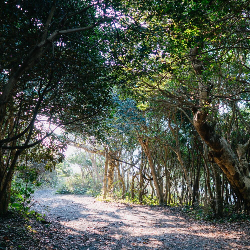 屋久島の小さな森を抜けて、川を渡った朝。  いつものジュエリー作りが始まりました。