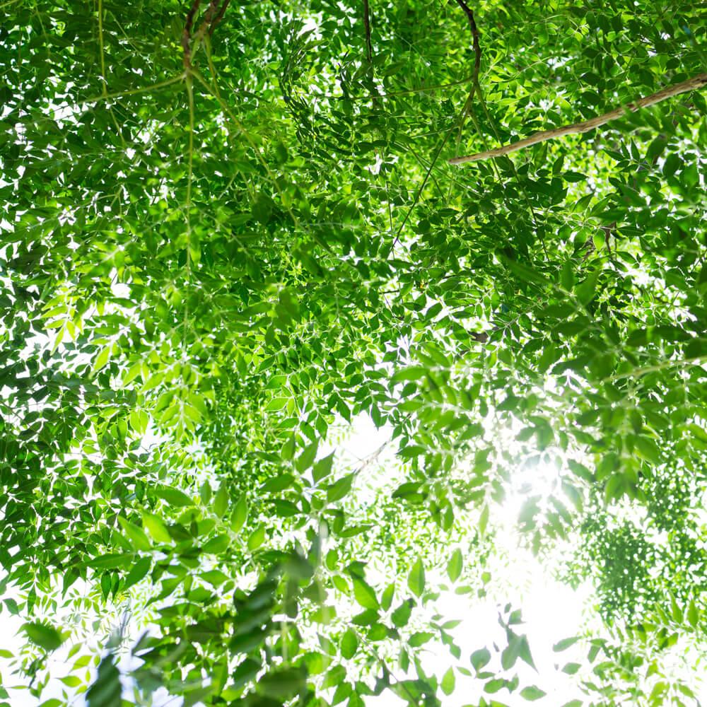 屋久島の木々を見上げる 緑いっぱい 屋久島日々の暮らしとジュエリー
