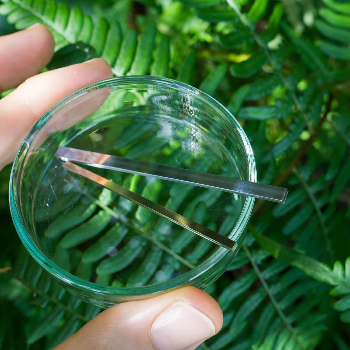 屋久島のシダバック オーダーメイドマリッジリングの素材を手に 屋久島のシダモチーフ 屋久島でつくる結婚指輪