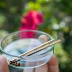 オーダーメイドマリッジリングの素材 屋久島の緑バック ゴールド 屋久島でつくる結婚指輪