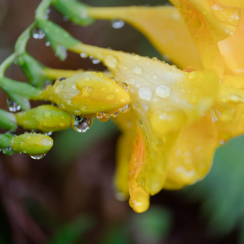花と雨のしずく オーダーメイドジュエリーのアトリエ 屋久島雨とジュエリー オーダーメイドマリッジリングのインスピレーション