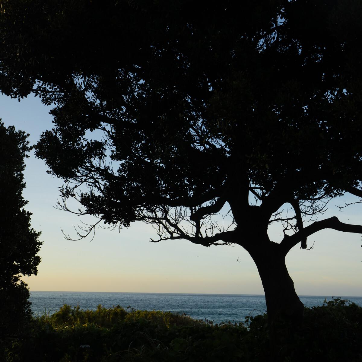 木々の影の向こうに夕暮れ時の海 屋久島海とジュエリー オーダーメイドマリッジリングのモチーフ