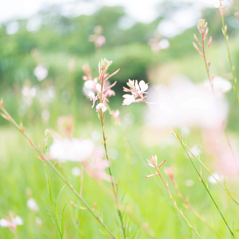 屋久島の花 屋久島花とジュエリー 風 オーダーメイドマリッジリングのインスピレーション
