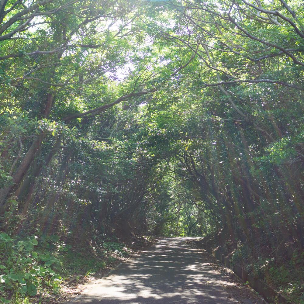 屋久島の道 緑のトンネル 屋久島日々の暮らしとジュエリー オーダーメイドジュエリーのインスピレーション