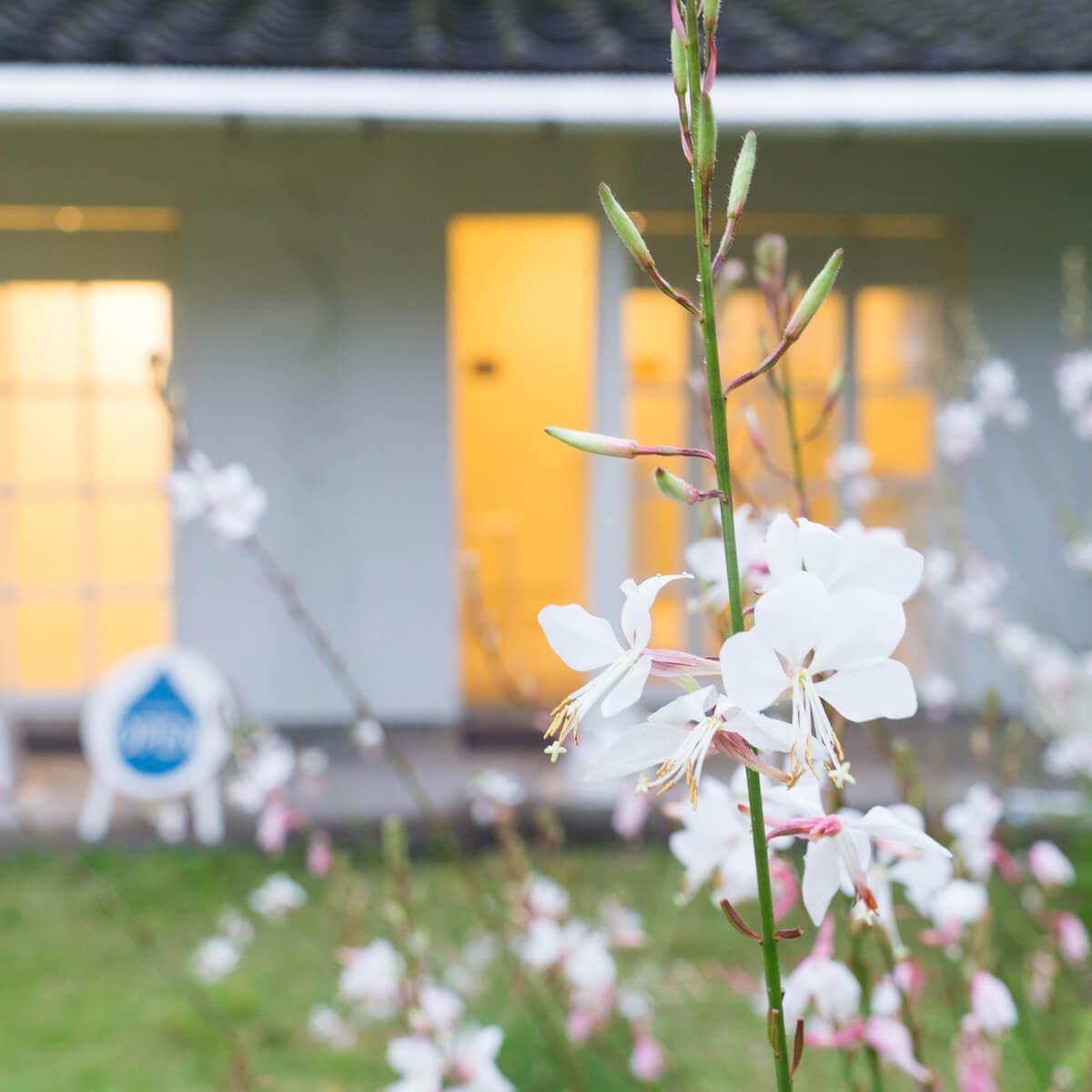 屋久島しずくギャラリー 屋久島の花に囲まれて 結婚指輪の相談会 屋久島でつくる結婚指輪