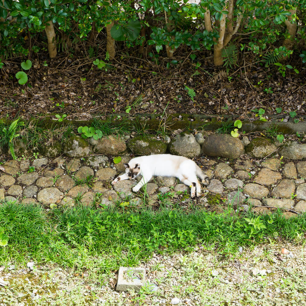 屋久島の猫 屋久島日々の暮らしとジュエリー