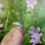 シダの指輪 屋久島の緑バック 屋久島のシダモチーフ プラチナ、ゴールド 屋久島でつくる結婚指輪