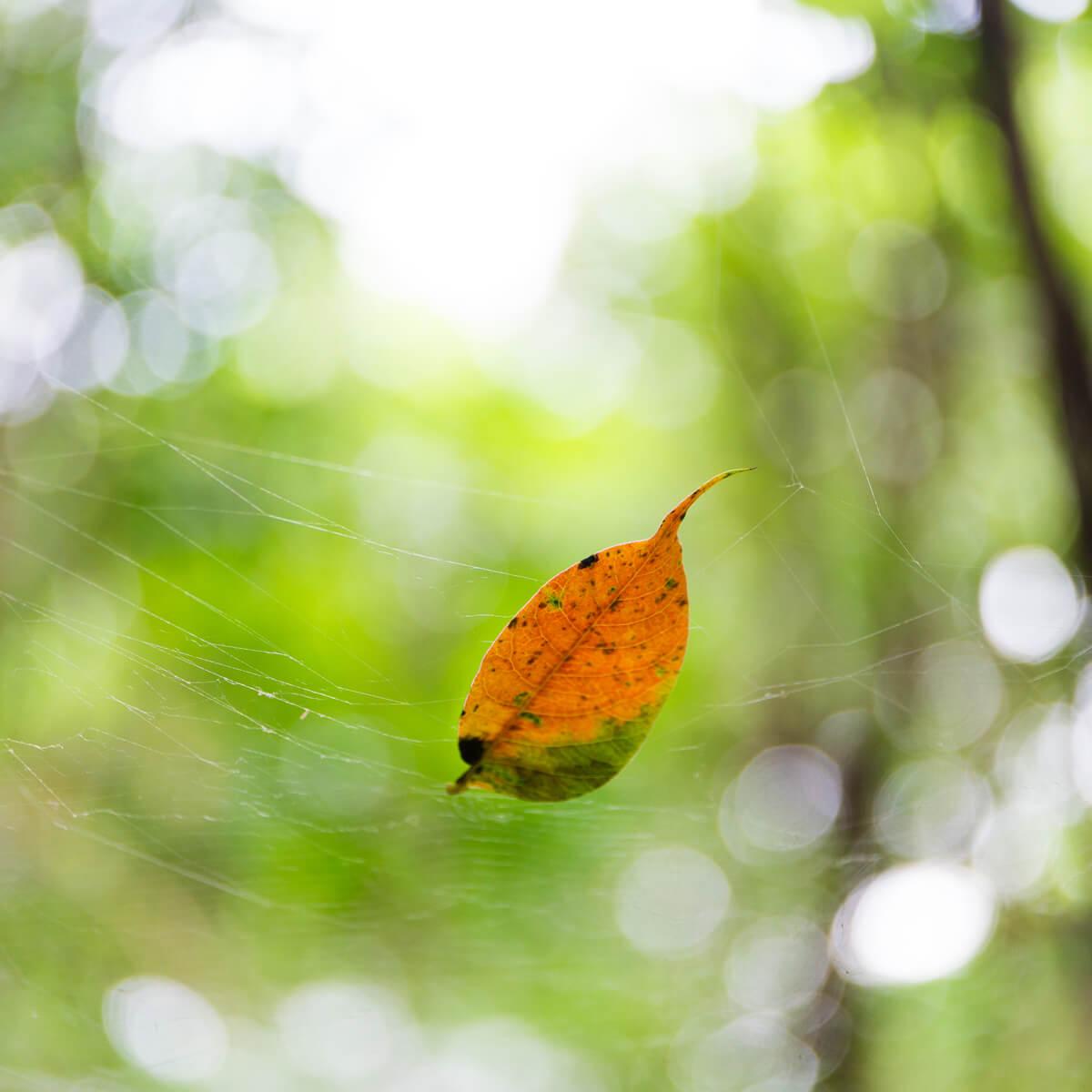 オレンジ色の葉っぱ 屋久島の緑の中 屋久島日々の暮らしとジュエリー オーダーメイドマリッジリングのインスピレーション