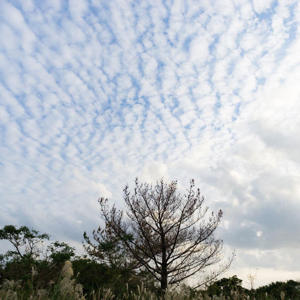 屋久島の空 うろこ雲