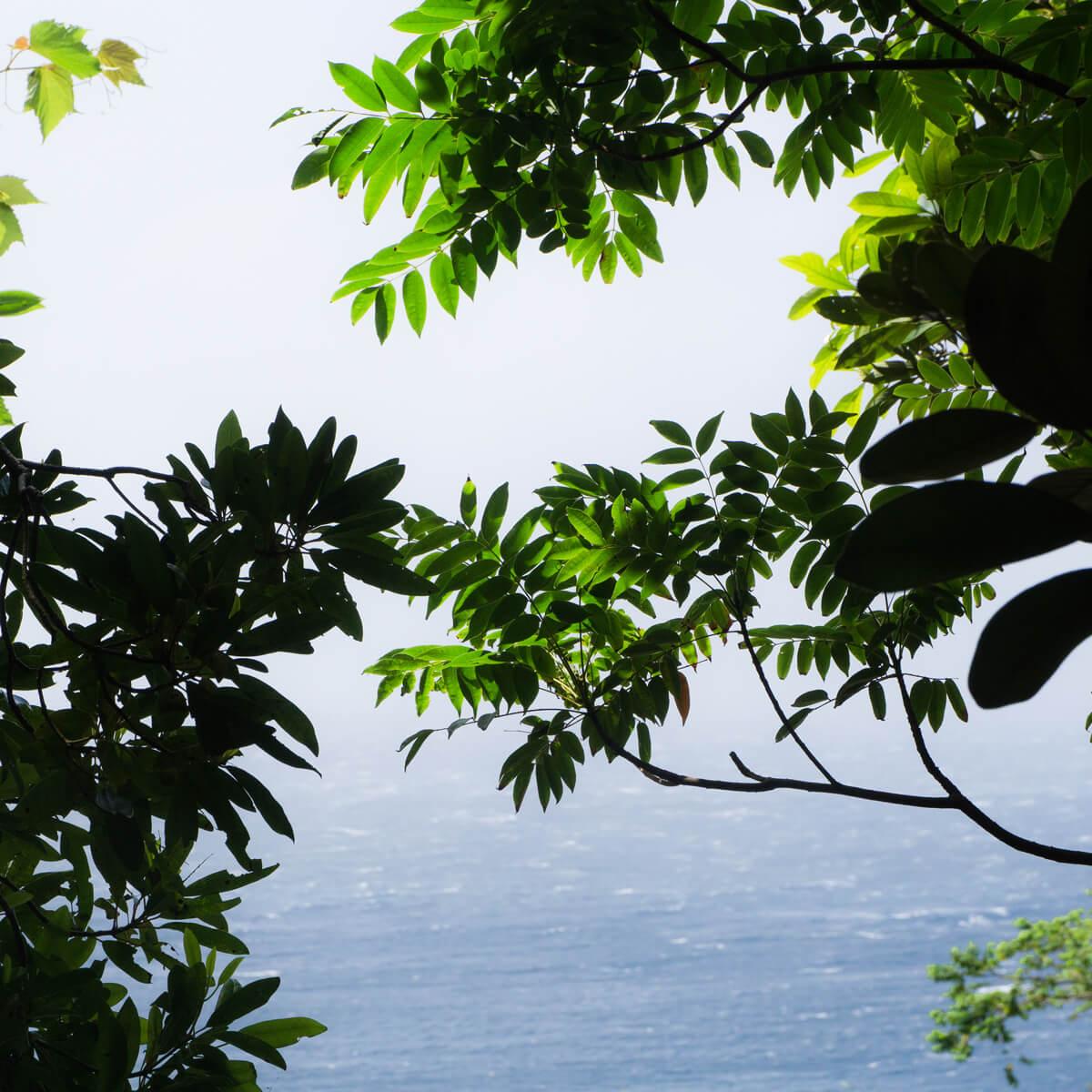 ルーペとピンセットを持たない日 #屋久島海とジュエリー