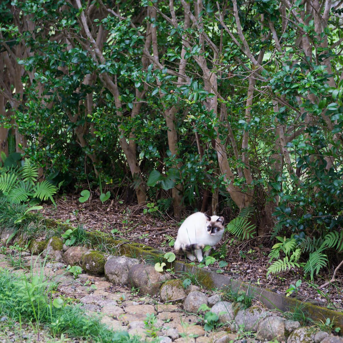 猫、ジュエリーのアトリエのにわ 屋久島日々の暮らしとジュエリー