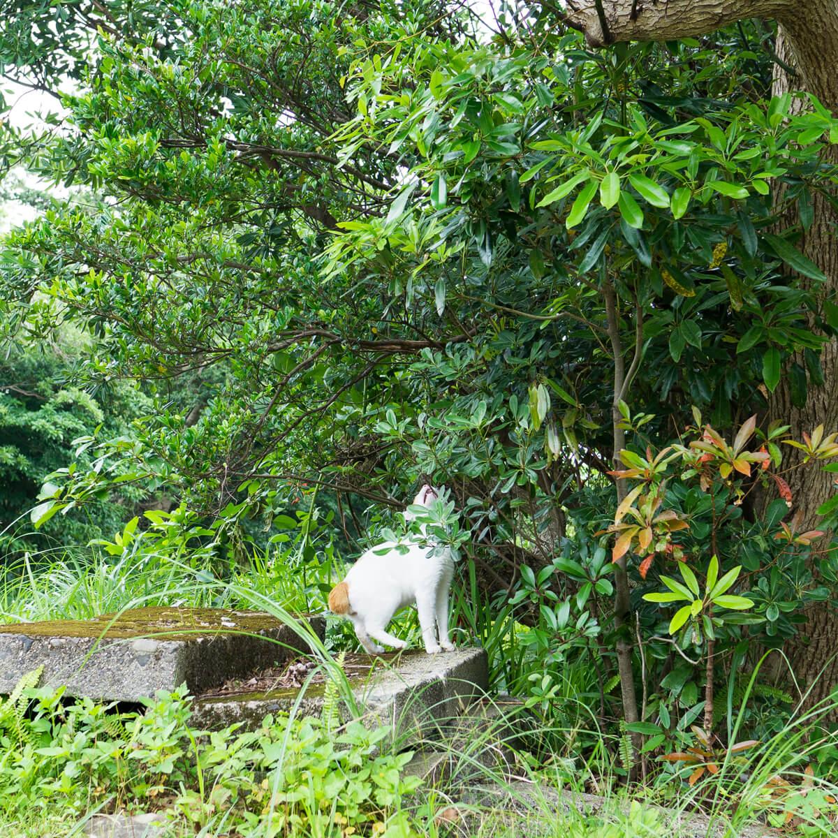 猫 屋久島日々の暮らし オーダーメイドマリッジリングのインスピレーション