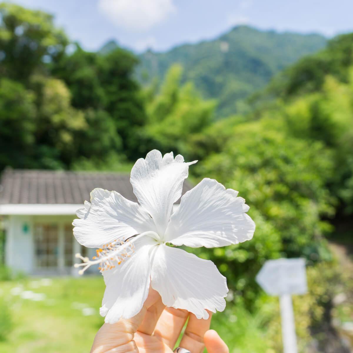屋久島のハイビスカス越しに屋久島しずくギャラリー ジュエリーのアートギャラリー 屋久島の緑に包まれて