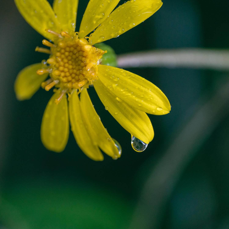 """屋久島のしとしと雨降りに心傾けながら作るジュエリー。 プラチナ×ダイヤモンド """"しずくの指輪"""""""