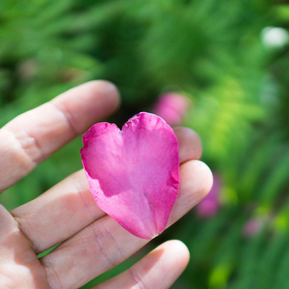 山茶花の花びら ハート 屋久島日々の暮らしとジュエリー