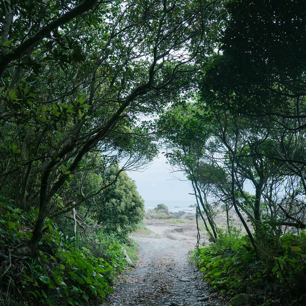 屋久島森のトンネル 向こうに見える海 屋久島海とジュエリー オーダーメイドマリッジリングのインスピレーション