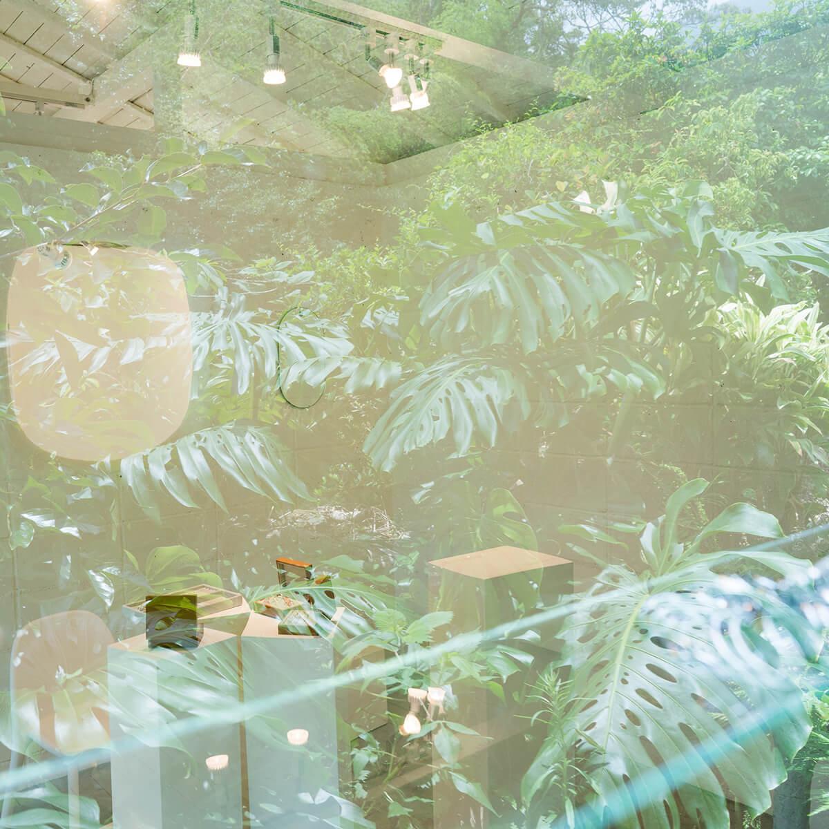 屋久島しずくギャラリー 窓に映る屋久島の植物 屋久島でオーダーメイドマリッジリングの相談会 屋久島でつくる結婚指輪