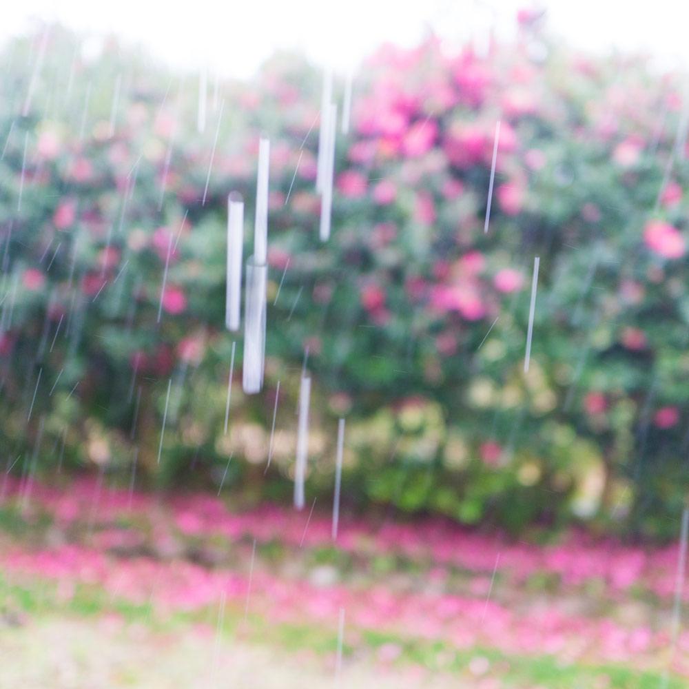 雨と屋久島の山茶花 ジュエリーのアトリエ