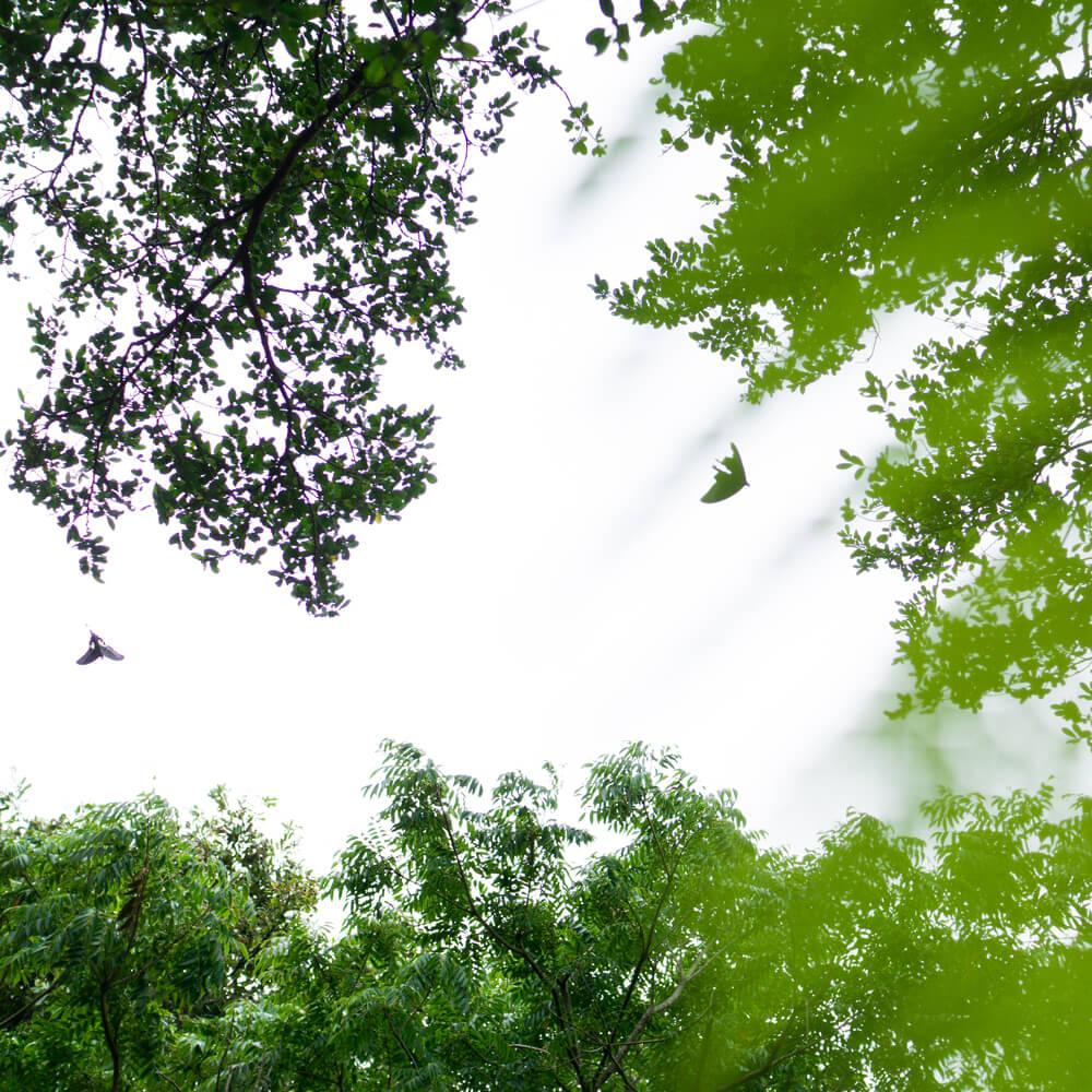 空を見上げる、シダ越し、蝶々、木々 屋久島日々の暮らしとジュエリー 屋久島でつくる結婚指輪インスピレーション