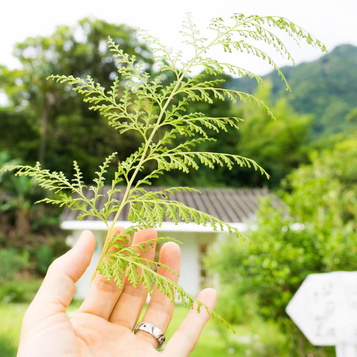 屋久島しずくギャラリー 青空 屋久島の花々 オーダーメイドジュエリーの展示、販売